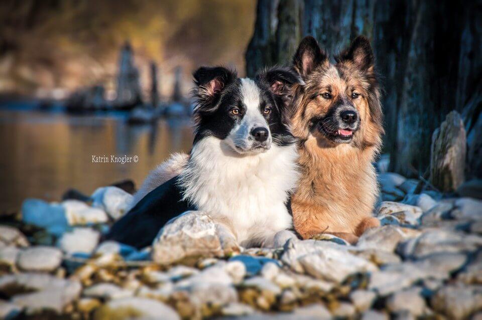 Termin vereinbaren bei Nina Haslinglehner Hundestylist in Behamberg, nähe Steyr.