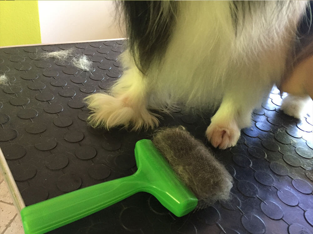 Idefix beim Hundefriseur Hundstauglich
