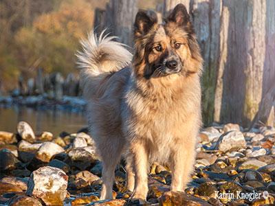 Leistungen Hundefriseur Hundstauglich