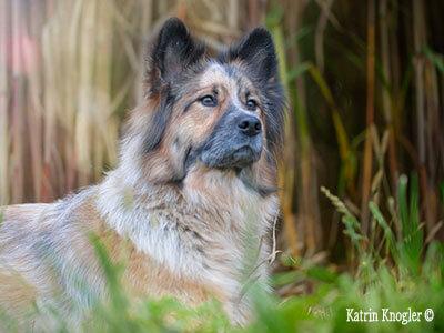 Preisliste Hundefriseur Hundstauglich nähe Steyr